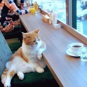 Funny Cat *lol!*