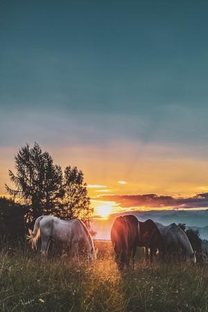 馬 at Sunset