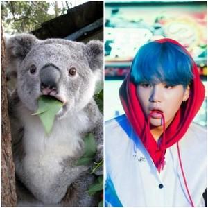 Koala Suga Meme