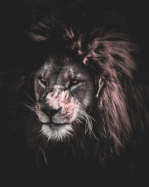Lion's Portrait