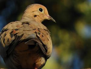Morning 비둘기