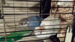 My sisters bfs birds