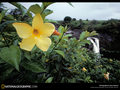 National Geographic - national-geographic wallpaper