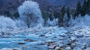 Nature scenery