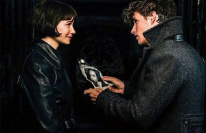 Newt/Tina - Fantastic Beasts And The Crimes Of Grindelwald