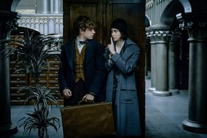 Newt/Tina - Fantastic Beasts And Where To Find Them