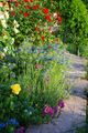 Path Behind Flower Bed - cherl12345-tamara photo