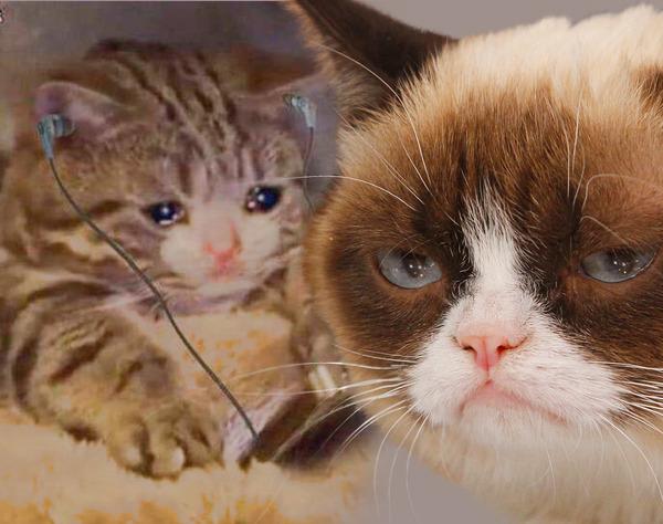 RIP GRUMPY CATS CATS CRYING SAD