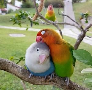 Real Love Birds! 💕