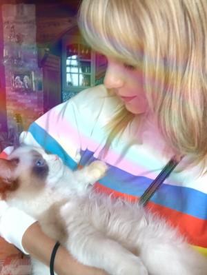TAYLOR nhanh, swift tình yêu mèo KITTEN BENJAMIN BUTTON