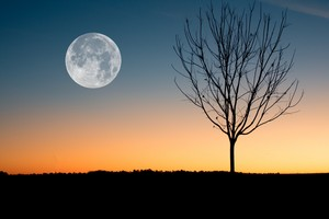 arbre at Night