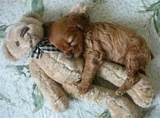 cute animali cuddling❤