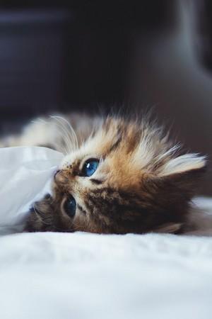 so sweet kitten/ᐠ。ꞈ。ᐟ✿\