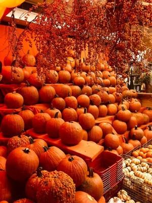 🎃 Halloween 👻