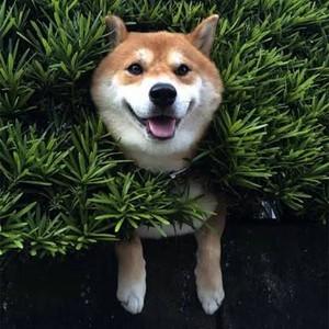 Aesthetic doggo