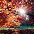Autumn - beautiful-things photo