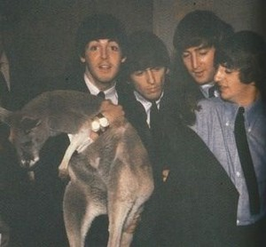 Beatles and a kangaroo?