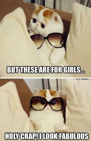 고양이 HUMOR