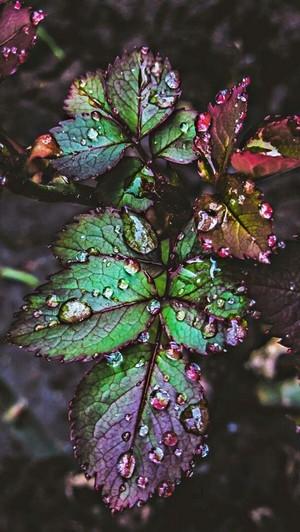 Colourful Rainy Leaves