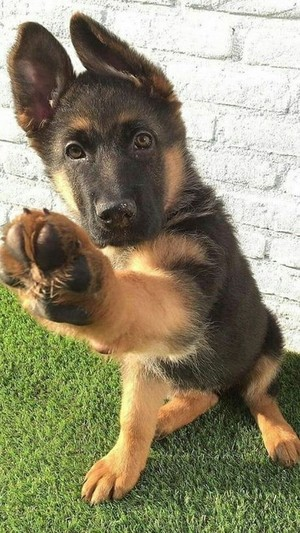 Cute Dog!