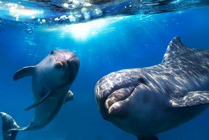 Dolphins 😍