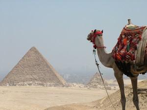 EGYPT camello