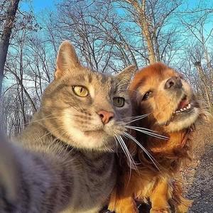Furry Những người bạn