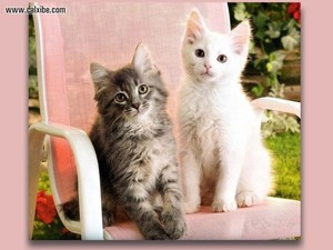 anak kucing kertas dinding