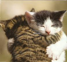 Kitty Hugs
