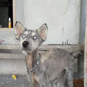 anjing, anak anjing Cinta