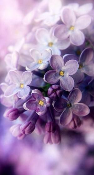 Purple things💜🎨
