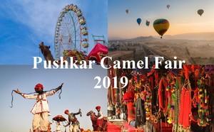 Pushkar camello fair 2019