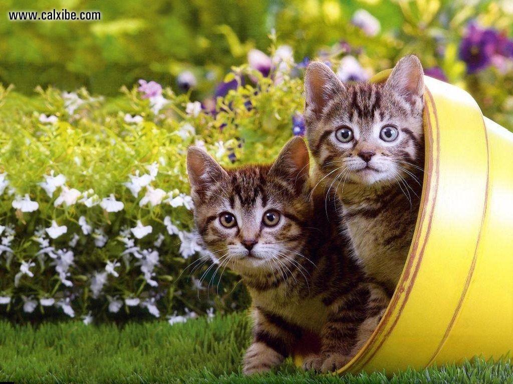 TWO KITTIES