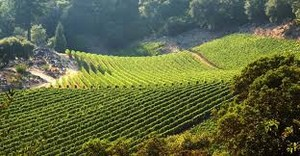Tuscany Wine Tours in Italy
