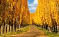 autum colours new england new south wales Australia - bing wallpaper