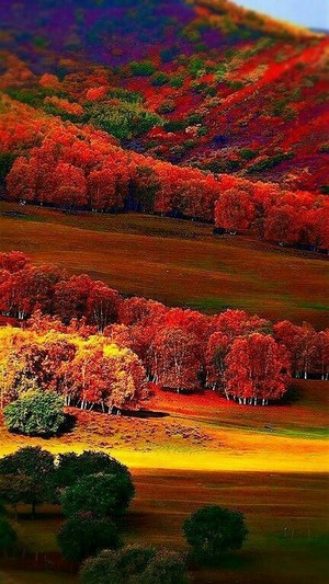 beautiful autumn❤️🌸