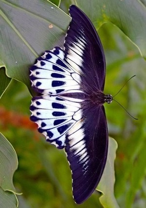 beautiful butterflies❤️🦋