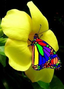 beautiful butterfly❤️🦋