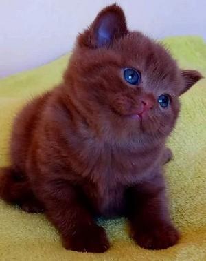 beautiful cats/kitten❤️🌸