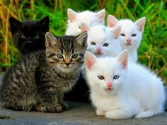 beautiful sweet kittens❤️🌸