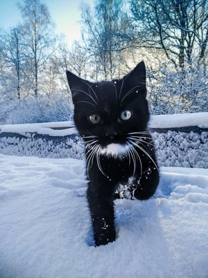 Pusa playing in the snow⛄