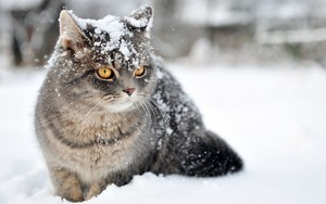 gatos playing in the snow⛄