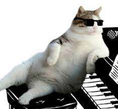 Kitty Maestro