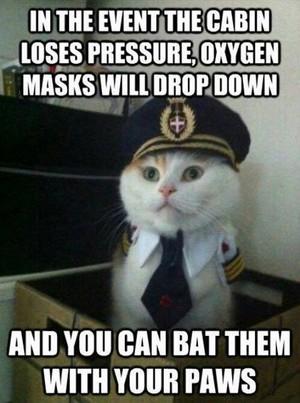 meow XD