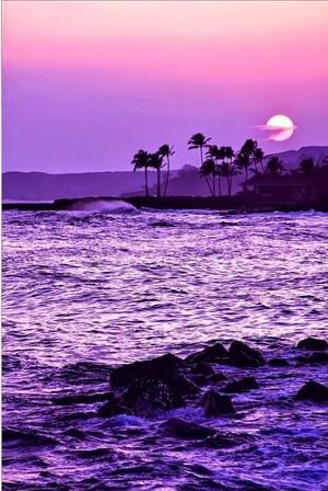 purple nature💜🌺