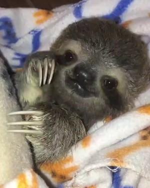 some আরো sloths ❤