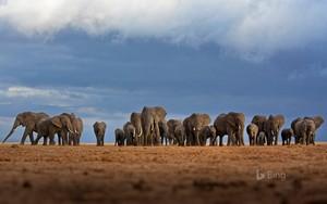 world gajah hari