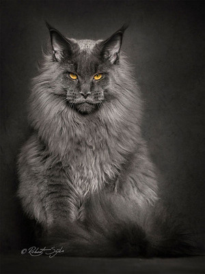 ~CHARACTER~ The Mysterious Feline