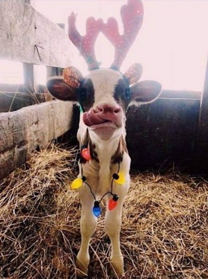 🌟Christmas on the Farm🎄🐄