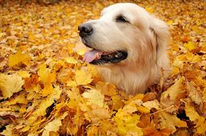 Autumn puppies🍃
